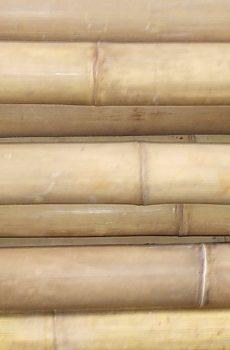 Bamboe Palen Gamma.Bamboe Palen Gamma Archives Bamboepaal