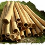 Moso bamboepaal, meest veelzijdig.